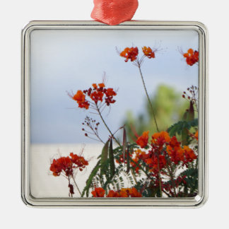 Mexican Bird of Paradise Silver-Colored Square Ornament