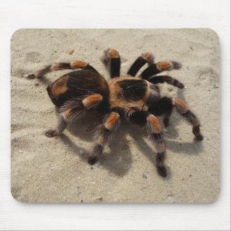 Mexican Flameknee Tarantula Spider Mouse Pad