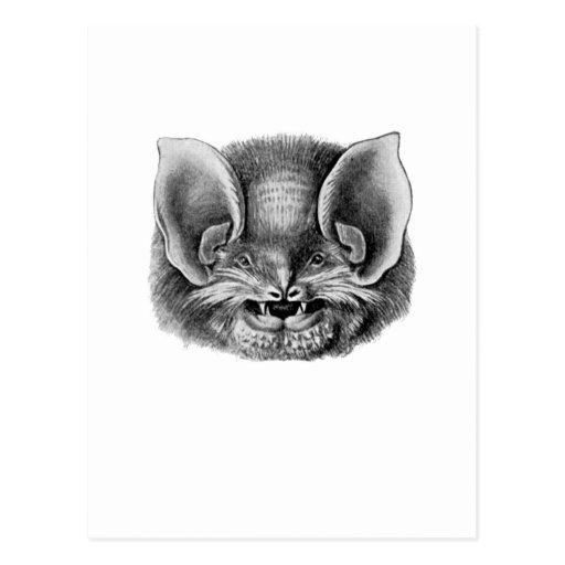 Mexican Funnel-eared Bat Postcard