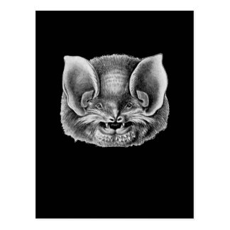 Mexican Funnel-eared Bat Post Card