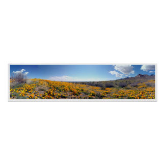 Mexican Golden Poppies - Franklin Mountains Poster