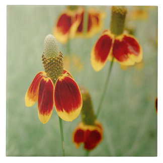 Mexican Hat Texas Wildflowers Ceramic Tiles