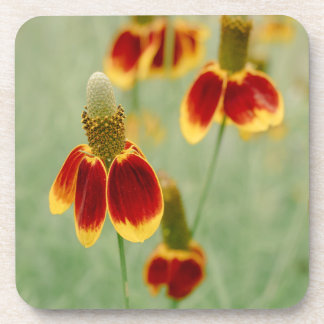 Mexican Hat Texas Wildflowers Coaster