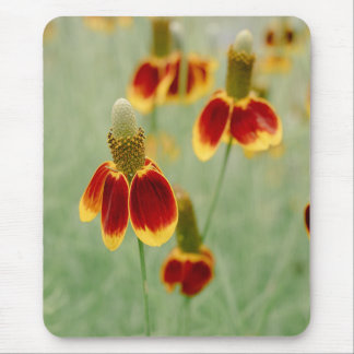 Mexican Hat Texas Wildflowers Mouse Pad