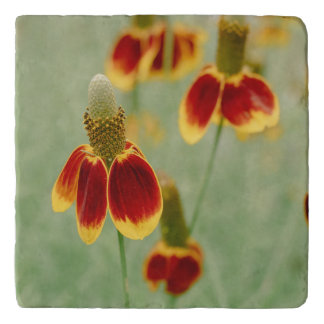 Mexican Hat Texas Wildflowers Trivet