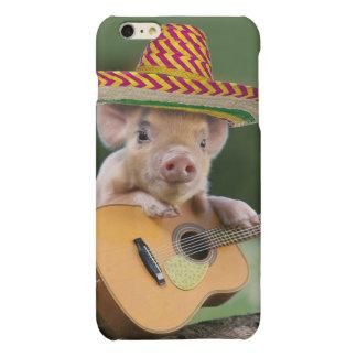 mexican pig - pig guitar - funny pig