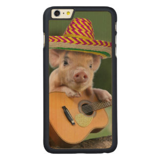 mexican pig - pig guitar - funny pig carved maple iPhone 6 plus case
