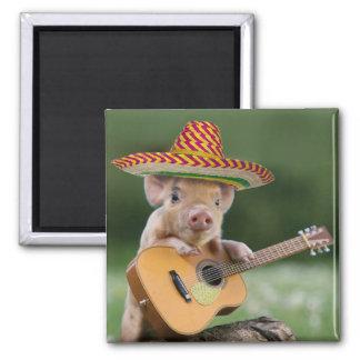 mexican pig - pig guitar - funny pig magnet