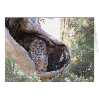 Mexican Spotted Owl Card