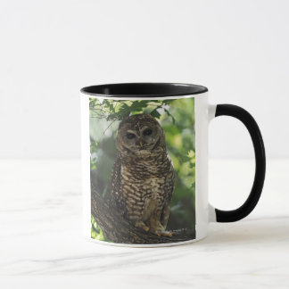 Mexican Spotted Owl On Perch In Gambel Oak Mug
