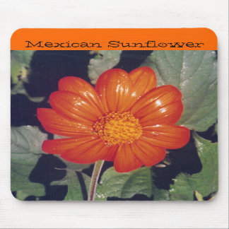 Mexican Sunflower - mousepad