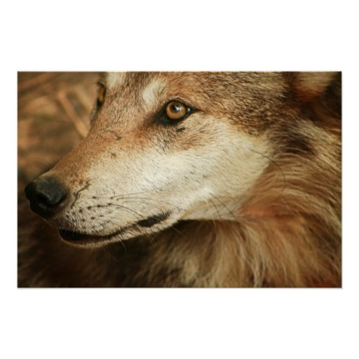 Mexican Wolf Posters