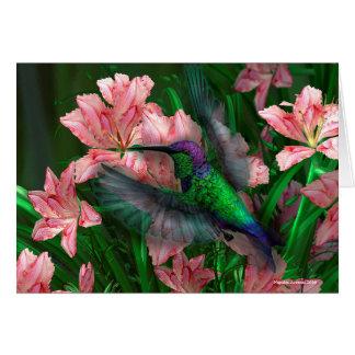 Mexican Wood Nymph Humming Bird Card