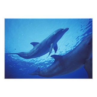 Mexico, Cozumel. Bottlenosed Dolphin, Tursiops Photo Art