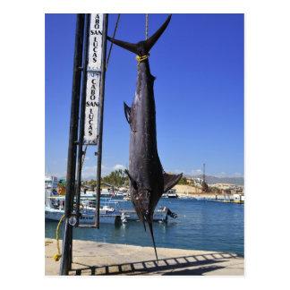 Mexico Marlin Postcard