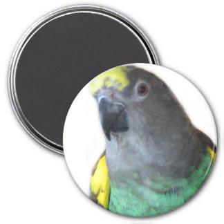 Meyers Parrot Magnet