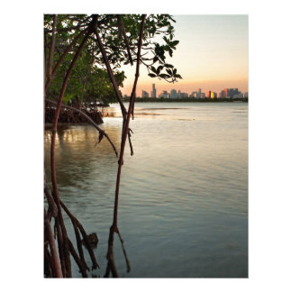 Miami and Mangroves at Sunset Letterhead