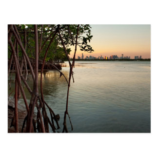 Miami and Mangroves at Sunset Postcard