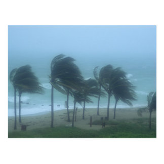 Miami Beach, Florida, hurricane winds lashing Postcard