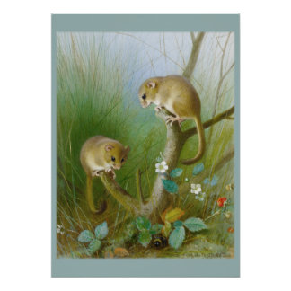Mice CC0123 Kid's Room Poster