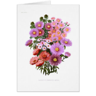 Michaelmas Dasies (Asters) Card