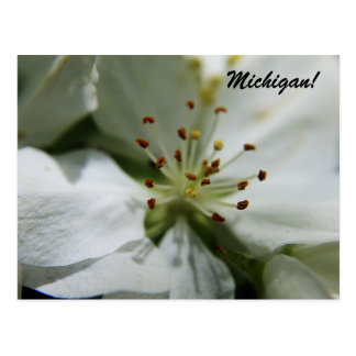 Michigan Apple Blossom Postcard