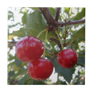 Michigan Cherries Ceramic Tile