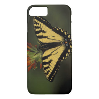 Michigan, Houghton Lake. Tiger Swallowtail on iPhone 7 Case