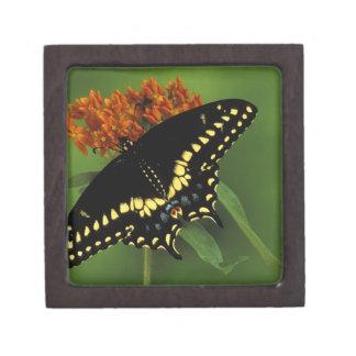 Michigan, Rochester. American Eastern Black Premium Jewelry Boxes
