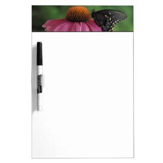 Michigan, Rochester. Spicebush Swallowtail on Dry-Erase Board