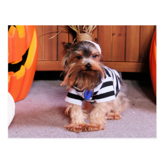 Mickey - Yorkshire Terrier - Shannon Postcard