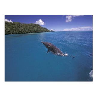 Micronesia, Palau Bottlenose dolphin Tursiops 2 Postcard