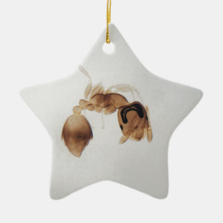 Microscope photo of an ant ceramic ornament