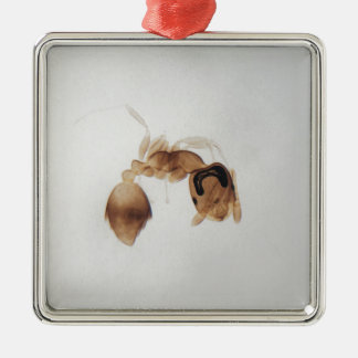 Microscope photo of an ant metal ornament