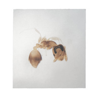 Microscope photo of an ant notepad