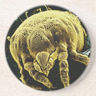 Microscopic Arthropod Acari Mite Lorryia Formosa Beverage Coaster
