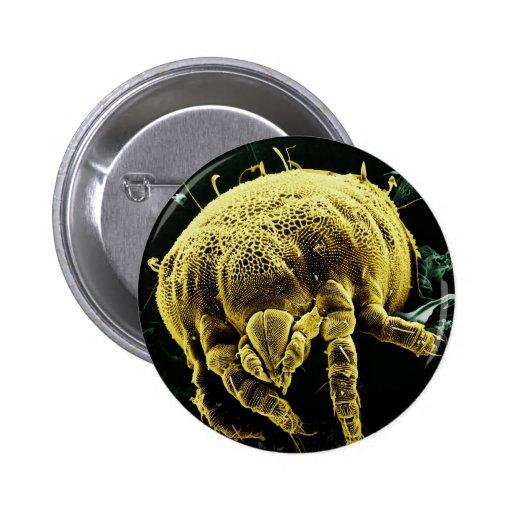 Microscopic Arthropod Acari Mite Lorryia Formosa Buttons