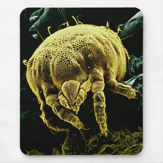 Microscopic Arthropod Acari Mite Lorryia Formosa Mouse Pad