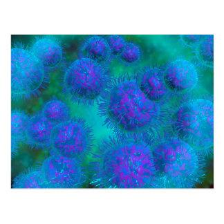 Microscopic View Of Diplococcus Bacterium Postcard