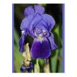 Midinight Iris Floral Postcard