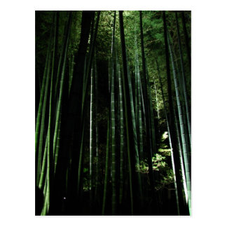 Midnight Bamboo Postcard