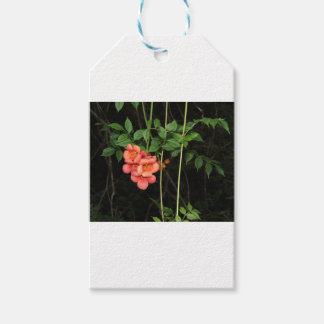 Midnight Flowers Gift Tags