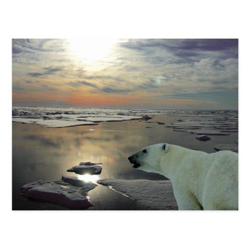 Midnight sun & polar bear, Arctic Ocean Post Cards