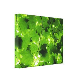 Midsummer Forest Canvas