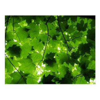 Midsummer Forest Postcard