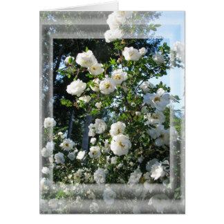 Midsummer Roses Card