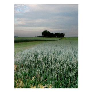 Midwest Farmland Wheat Field Postcard