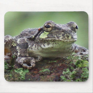Midwest Tree Frog Mouse Pad