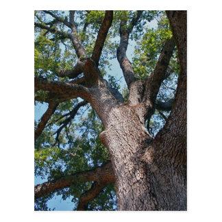 Mighty Oak Postcard