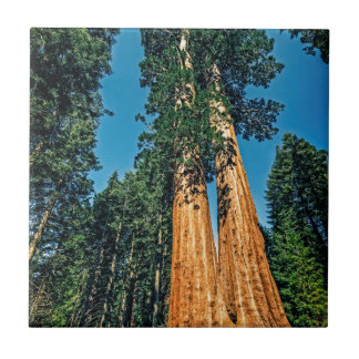 Mighty Redwood Tile